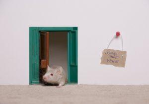 飲食店を閉店に追い込む怖いネズミの駆除