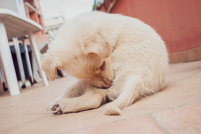 犬にもネコノミ?いつもと違うペットの仕草は要チェック。